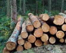 Лесоматериалы, пиломатериалы